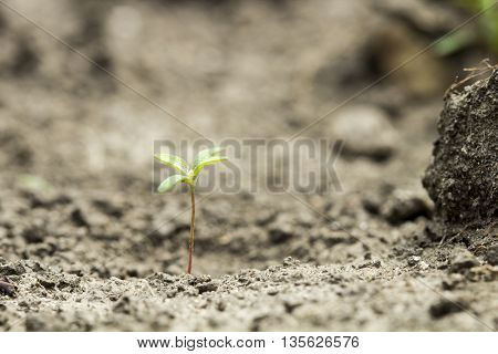 Little seed germination growth into the forest