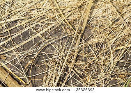 dry grass background in summer heat day