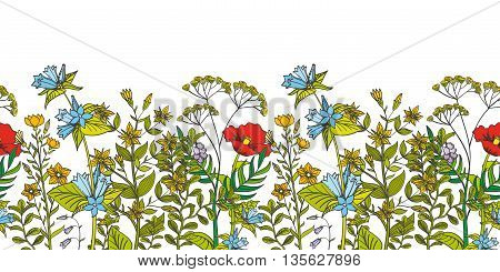 Seamless vector floral border with colored herbs and wild flowers. Herbal foliage aromatic flower and illustration organic flower seamless