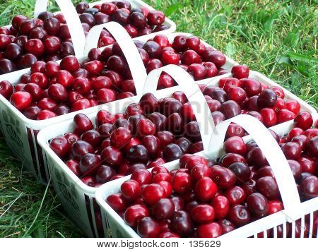 Cherry Baskets