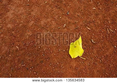 Yellow Birch Leaf An Tennis Court. Crushed Bricks Surface.