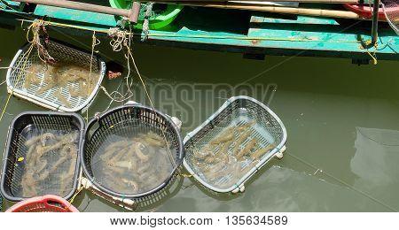 Live Mantis Shrimp In Basket