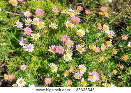 Many White And Pink Flowers With Yellow Stamens