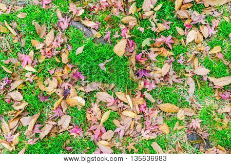 Red Yellow autumn maple leaves on fresh spring green grass