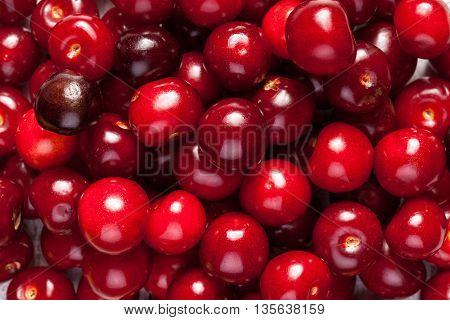Bunch Of Fresh Juicy Cherries