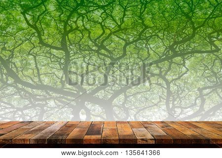 Empty wood table top with big tree background. For display or montage your products.