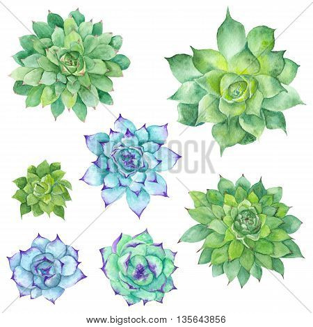 Hand-painted botanical illustration with three green tropical plants isolated on white background, Sempervivum botanical illustration