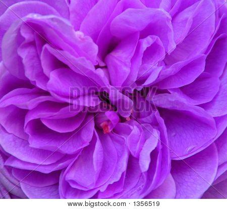 Stilisierte Lila Blüte