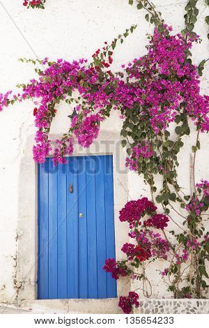 Blue wooden door with a bougainvillea bunch