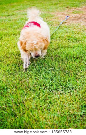 Sweet and interested young dog on green