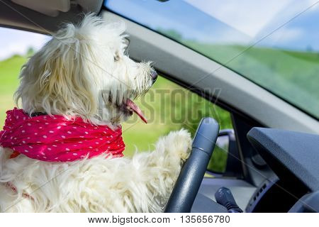 Dog driving a steering wheel in a car