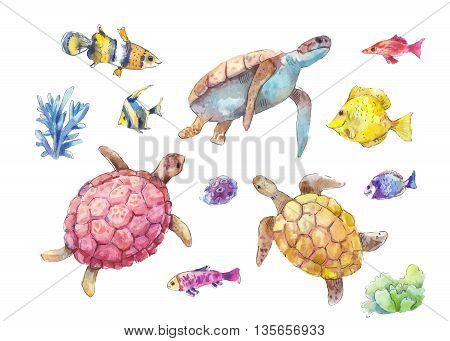 Set of sea turtles marine fish and algae painted in watercolor isolated on white background. Hand-drawn vector illustration.