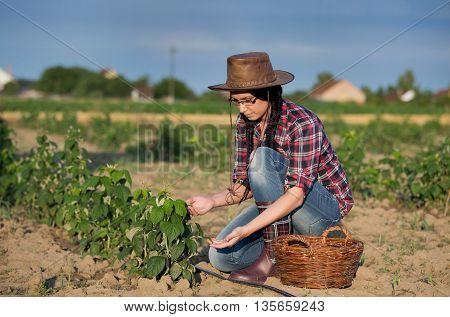 Farmer Girl At Raspberry Plantation