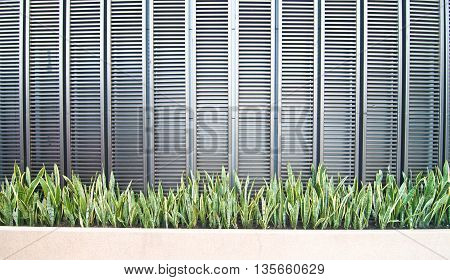Sansevieria plant inoutdoor plants font wall for decoration