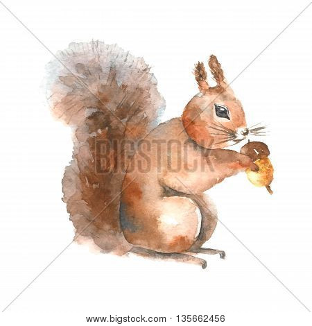 Watercolor squirrel. Hand drawn isolated squirrel with a nut on white background.