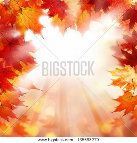 beautiful Fall Background with Autumn Maple Leaves