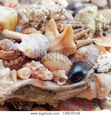 Several beautiful Sea shells background on stone
