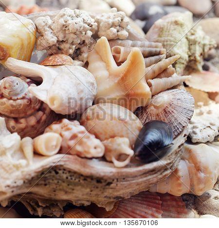 Several beautiful Sea shells background on stone