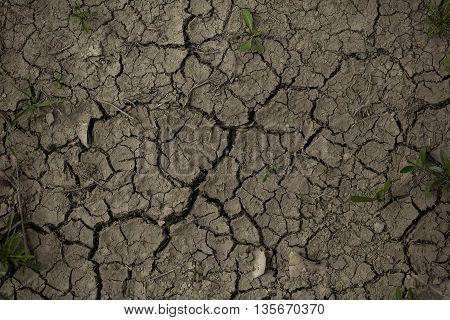 Cracked Textured Ground