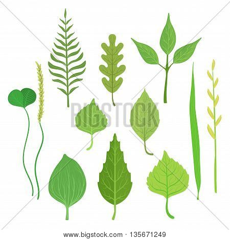 Trees And Plants Leaf Collection Of Realistic Design Flat Simple Vector Illustrations On White Background