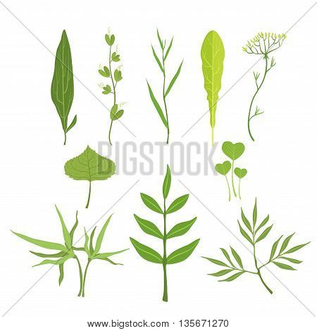 Trees And Plants Leaves Set Of Realistic Design Flat Simple Vector Illustrations On White Background