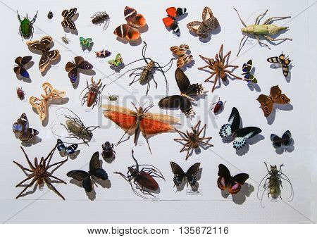 Pyatigorsk, Russia - 3 March, Various bugs and insects, 3 March, 2016. Resort zone Mineral Waters, Krasnodar region. Insect Museum.
