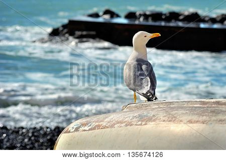 seagull sitting on a boat on the sea promenade on the waves background