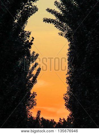 Reeds in Juslibol in Zaragoza Spain at sunset