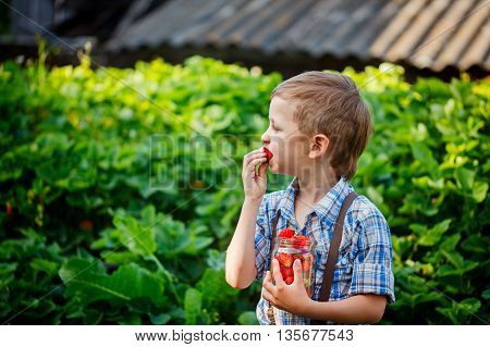 Cute Little Boy Eating A Ripe Fresh Strawberries In Summer Garden