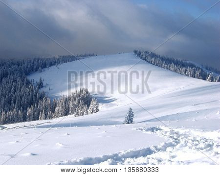 winter mountains with snowy trees in the Carpathians