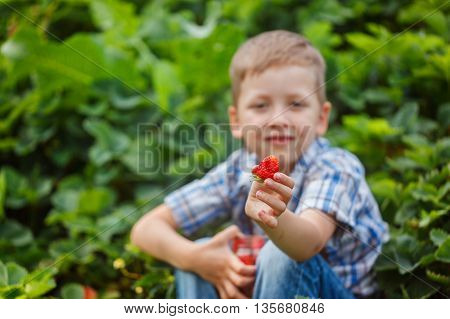 Hands Of A Child Holding Fresh Strawberriy,focus On Red Berry