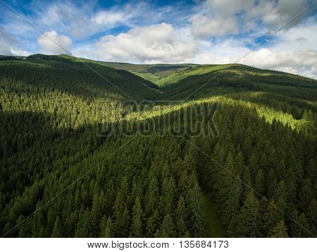 Aerial view of mountains covered with coniferous forests