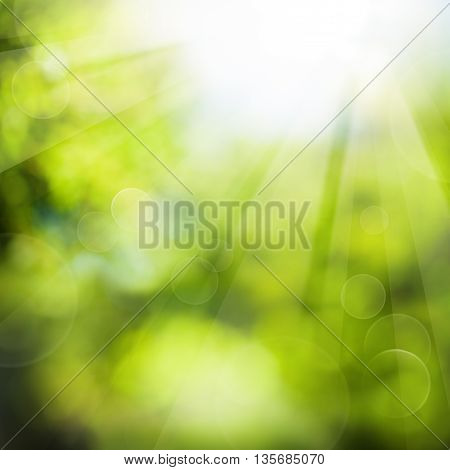 Green Summer Background with Foliage and Sunlight