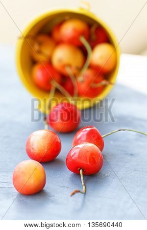 Cherries in a bucket on old wooden table - summer fruits