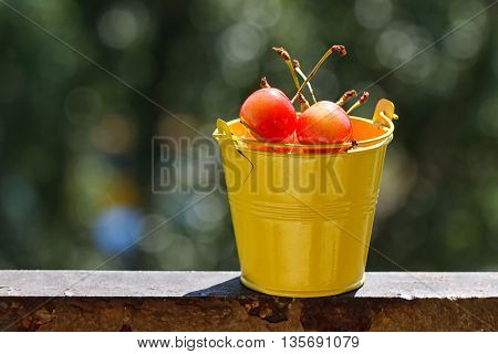 Yellow bucket of sour pie cherries ready for canning