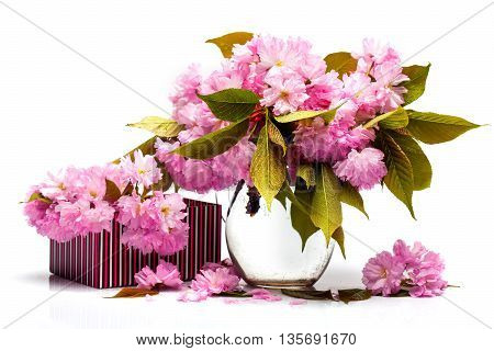 Sakura In Pitcher And Box