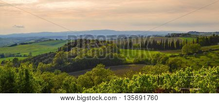 Panoramic view of a vineyard in the Tuscan countryside at sunset