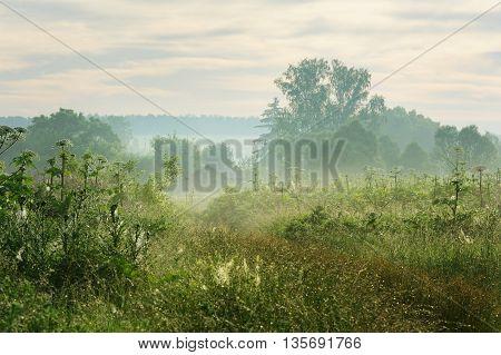 Morning fog covering wasteland with hogweed horizontal