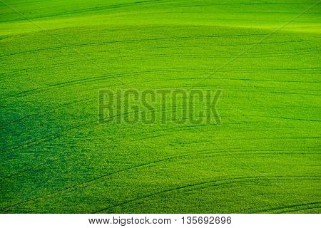 Green wavy hills in South Moravia,