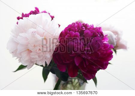 Bouquet of fresh light pink and purple peonies