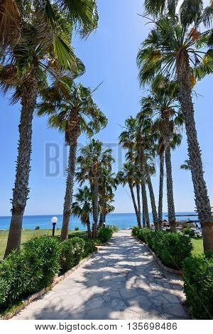 Palm trees road at the sea in protaras beach in cyprus island