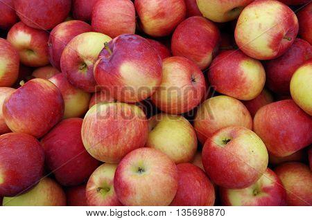 Reddish yellow apples in pile  at market detail