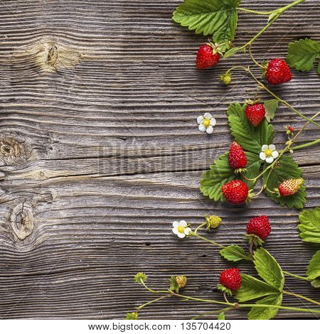 Fresh wild strawberry with leaves and flowers on a simple dark wooden structural background top view. The concept of natural organic healthy food
