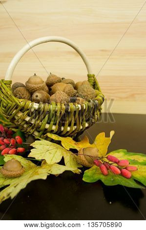 autumn leaves oak acorns and basket with acorns