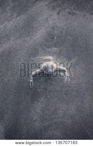 ghost crab hiding in sand in Thailand beach