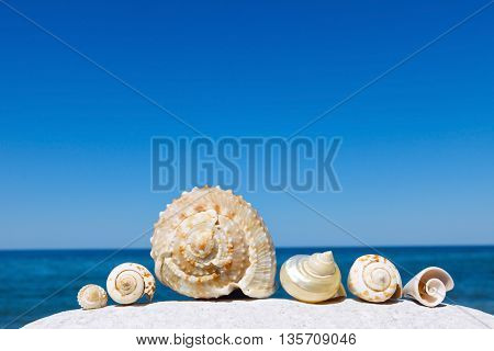 Exotic shells on the sea and blue sky background. Space for text