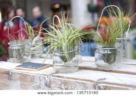 creative room flowers in jars in the store