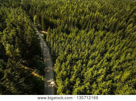 Aerial view of vast forests