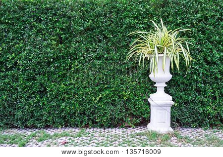 Trees In Pots With Green Leaves Wall Background.