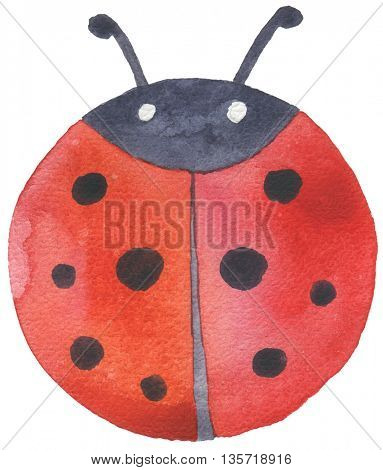 watercolor hand drawn hand drawn ladybug isolated
